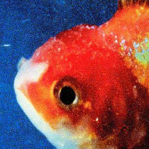 Vincestaplesbigfish